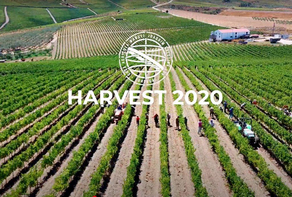 Harvest 2020! Iniciamos assim mais uma vindima